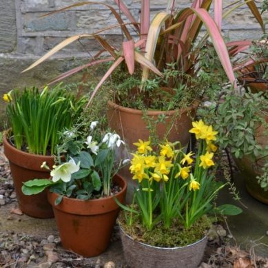 Spring back into action in the garden