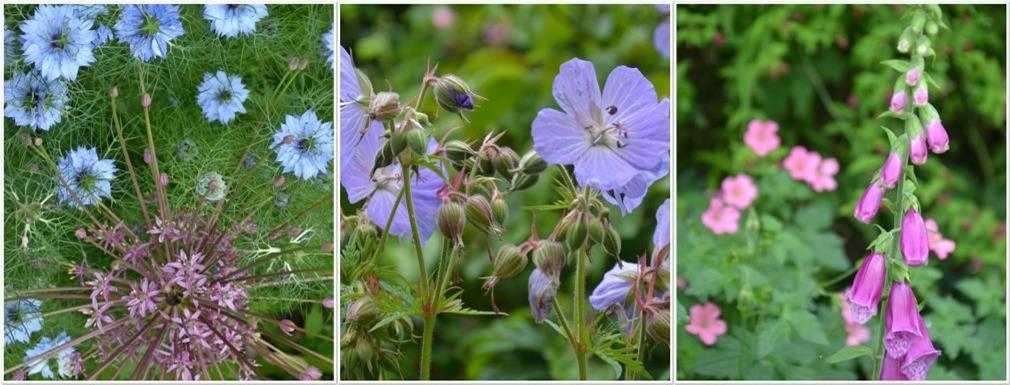 hay fever gardening